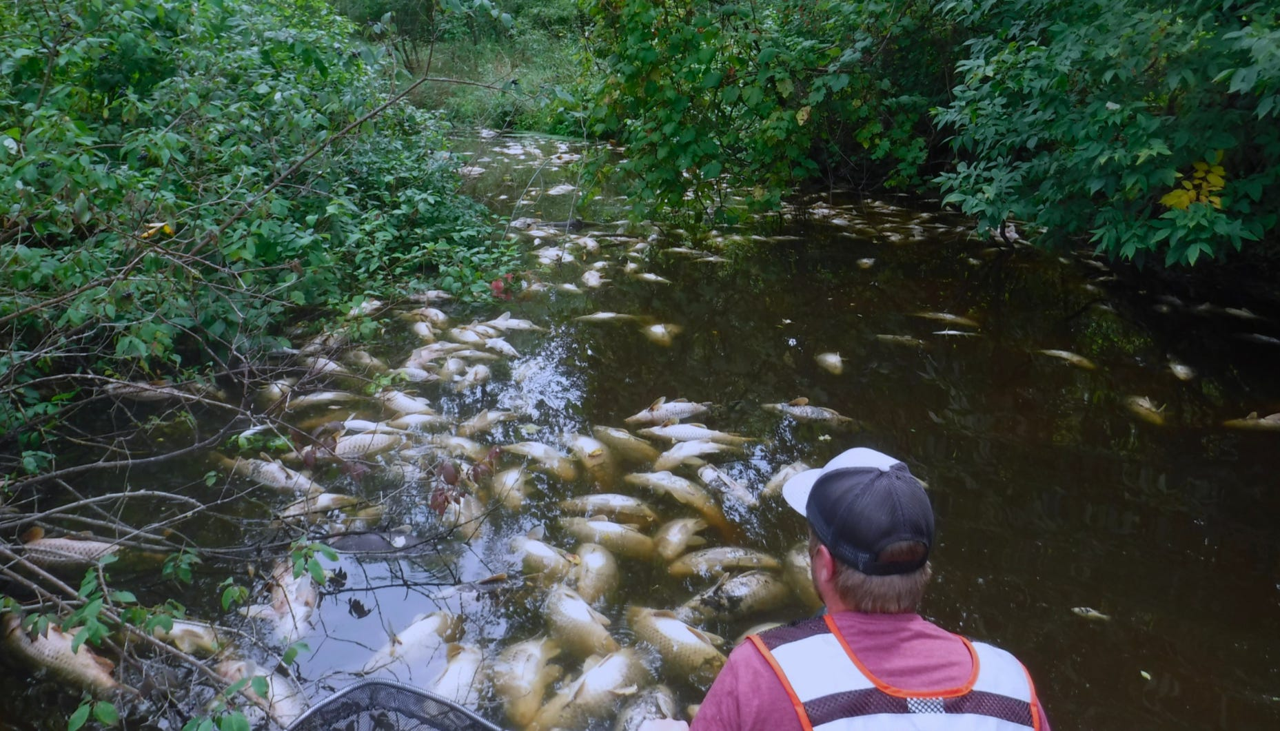 In August 2018,a combination of manurespreadingand heavy rains damaged miles of the Sheboygan River, killing fish.
