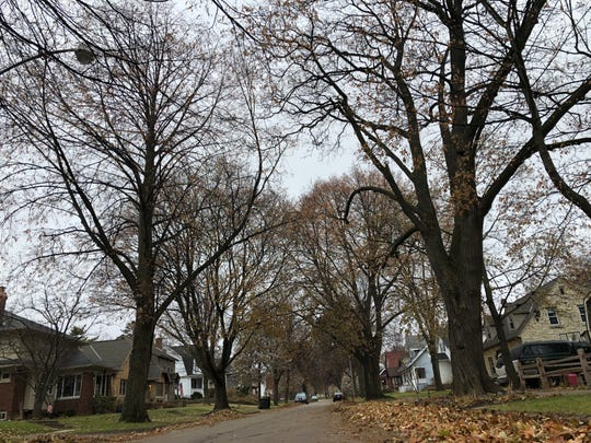 The city of Wauwatosa is using new technology to document all of the trees are located within its boundaries.