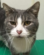 Rudy invites everyone to come visit him and the other animals at the Oshkosh Area Humane Society.