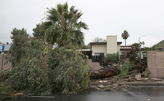 A tree blown over from a backyard near Thunderbird Road and Central Avenue lies in Phoenix, Ariz., on Friday Nov. 29, 2019.
