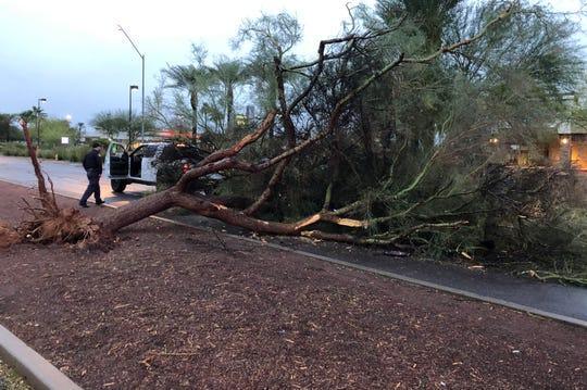 Cactus Road en el Valle del Norte se cerró en ambas direcciones la madrugada del viernes cerca de Tatum Boulevard después de que un árbol fue derribado.