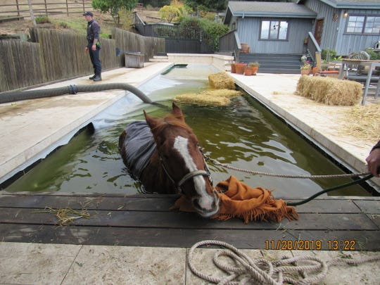 Monterey County SPCA Humane Officers and Gonzales Fire responded to the scene to rescue a struggling horse which fell into a Gonzales pool Nov. 28, 2019.