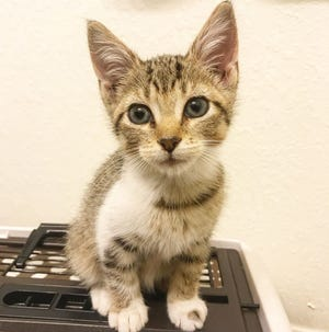 Pepper's adoption fee is $20, which includes her spay surgery, vaccines, and microchip + registration.