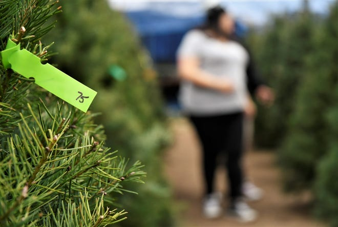 The average Christmas tree could cost you roughly $78.