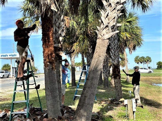 Volunteer  palm trimming by members of the SGI Business Association and the Civic Club in preparation for the Lighting of the Palms at St. George Island.