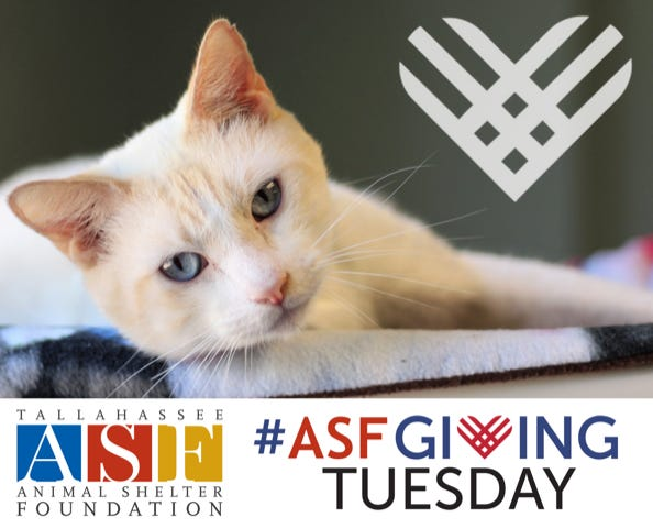 Animal Shelter Foundation is seeking donations on Giving Tuesday.