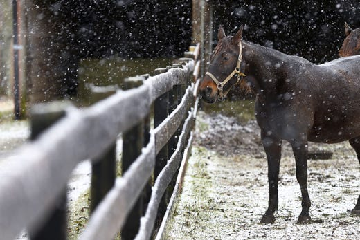Snow begins to accumulate around horses in a paddock on Holmes Mill Road in Allentown Monday morning, December 2, 2019.