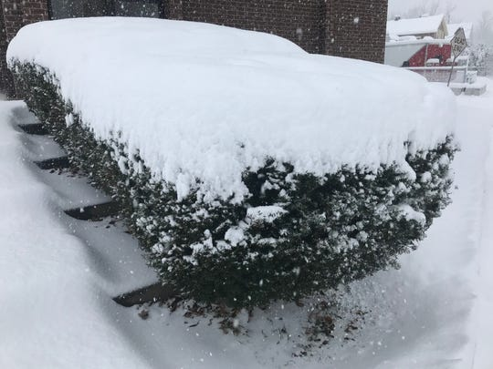 Snow covered a bush on the South Side of Binghamton on Dec. 2, 2019.