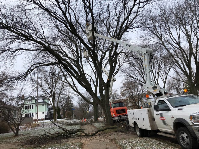Workers trim trees in the city of Wauwatosa. The city is using a new program to take inventory of all the trees in the city.