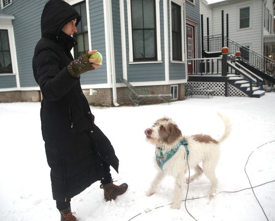 Kristen Girard's puppy, Summit plays fetch in the snow in the Village of Wappingers Falls on December 2, 2019.