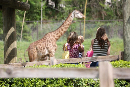 A scene from the Greenville Zoo