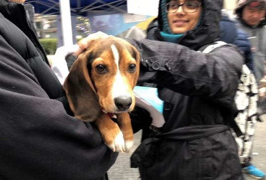 Max, a 5-month old beagle mix, cuddles and enjoys pats at Campus Martius.