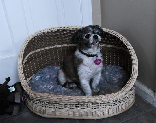 Amy Jorgensen weaved this basket for a dog bed for Emma.