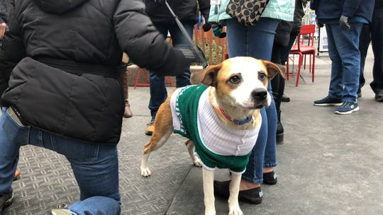 Coconut Cheesecake, a 2-year-old hound mix, loves the attention as crows gather around to meet her at Campus Martius.