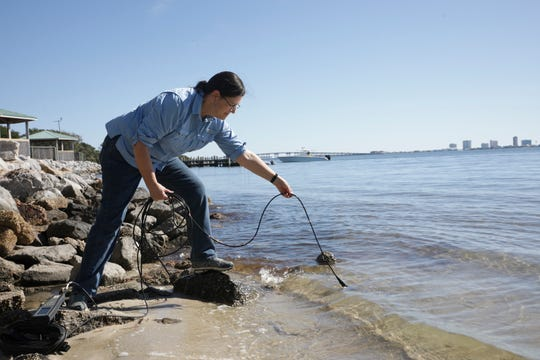 Jane Caffrey, professor in the University of West Florida's Center for Environmental Diagnostics and Bioremediation, collects data at the Shoreline Park in Gulf Breeze on Nov. 20.