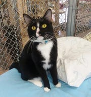 Kane is available for adoption at 10807 N. 96th Avenue, Peoria. For more information, call 623-773-2246 after 10 a.m.