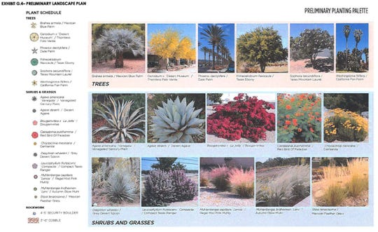 Here are some of the plants that will be a part of the downtown Palm Springs arena's landscaping. The arena, expected to cost $250 million, is being built in partnership with Oak View Group and is slated to open in 2021.