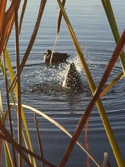 The motion decoy Pulsator XS is seen in this photo.