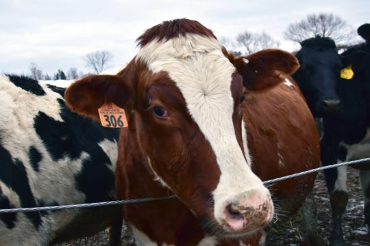The Dairy Business Innovation Initiative gained funding of $20 million, which helpsdairy businesses looking to get their start, grow their business, modernize their dairy plants and reach new markets.