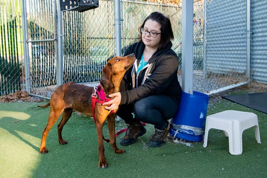 Genavieve checks in with staff member Kasey Stamey before going back to playing in the yard at Brother Wolf Animal Rescue on Dec. 4, 2019.  Genavieve is available for adoption through the rescue.
