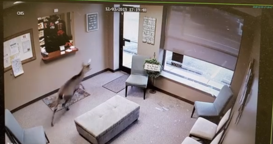 Women of Wellness in Collierville is undergoing repairs after a deer burst through its window late Tuesday afternoon.