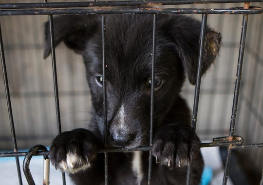 Stop by the Ouachita Parish Animal Shelter in West Monroe to find your new best friend.