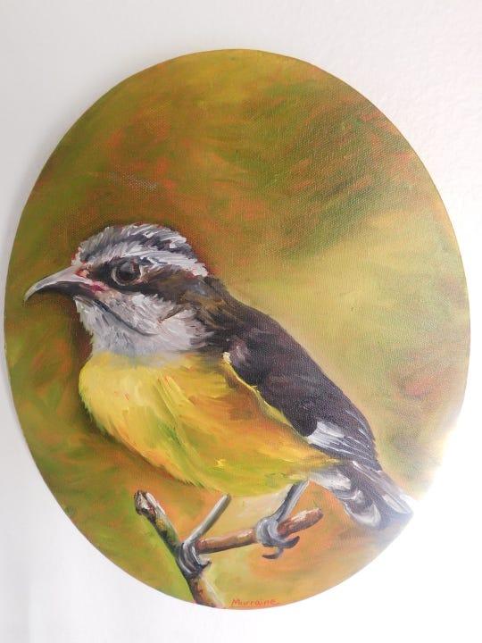 VI National Bird, Bananaquit.