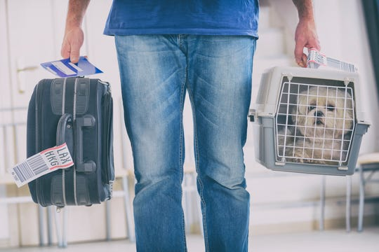 Traveling by air with your pet during the coronavirus pandemic means more rules and restrictions. Owners need to check with their airlines before booking a trip with a dog, cat or other animal.