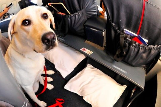 Some travelers complain that their fellow passengers claim their dogs are emotional support animals just to fly them for free.