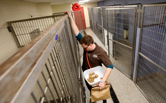 Jeremy Colborn, 29 of Lansing drops frozen treats into the kennels of dogs as a snack at the Michigan Humane Society in Westland, Michigan on December 5, 2019.