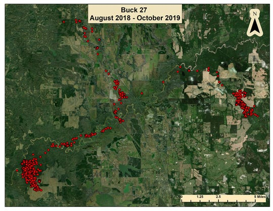 Located over 13 miles apart, this graphic shows Buck No. 27's two home ranges and excursions he's made over a 14-month period in Yazoo and Madison counties.