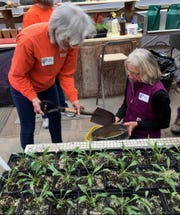 Barb Bremer and Bonnie Jaeckle, both of Mountain Home, sift compost in the greenhouse at Ozark Folk Center State Park.