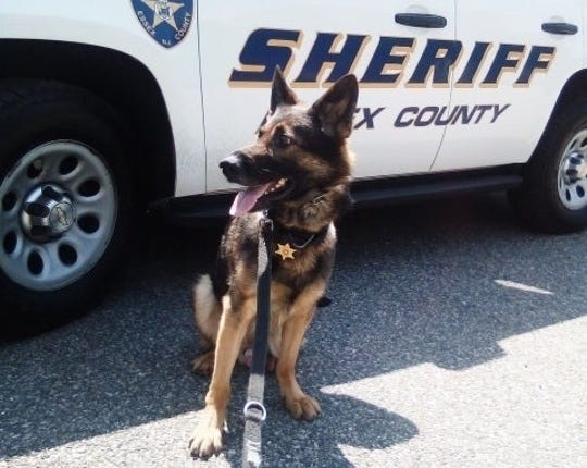 Marko, a bomb detecting K-9 German Shepherd with the Essex County Sheriff's Office.