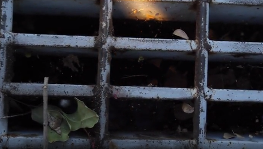Clogged storm drains in Gilbert become a breeding ground for mosquitoes.