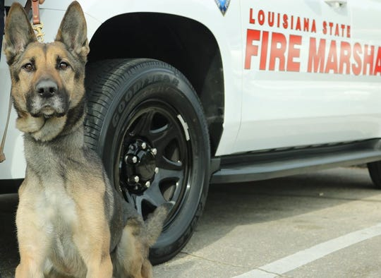 Undated photo of K-9 officer Maily.