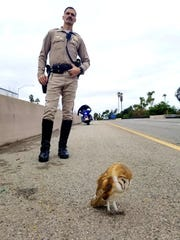 California Highway Patrol Officer Sean Kelly protects an incapacitated barn owl on Highway 101 in Santa Barbara on Thursday,  Dec. 5, 2019. A volunteer with  a wildlife rescue group took the owl to the Ojai Raptor Center.