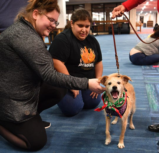 Midwestern State University students Olivia Kulhanek, left, and Abigal Martinez enjoyed visiting with Dyann Kramer's terrier mix therapy dog, Tebow, during a finals study session at Moffett Library Thursday evening.