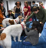 Certified therapy dogs Misha and Neva, Russian Wolfhounds, were popular with several Midwestern State University students taking a break from studying for final exams at the Moffett Library.