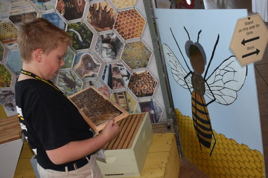 Gavin Card looks at a photo recreation of a honeycomb that Andy Havard, owner of HandyAndy Apiaries, created a with photos he took so children can view a honeycomb and learn about honeybees.