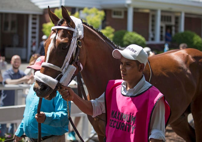 Maximum Security greets fans in the paddock prior to the fifth race at Monmouth Park. Trainer Jason Servis accompanied the horse to greet fans who showed support after Maximum Security was disqualified in the Kentucky Derby.Oceanport, NJSaturday, May 18, 2019
