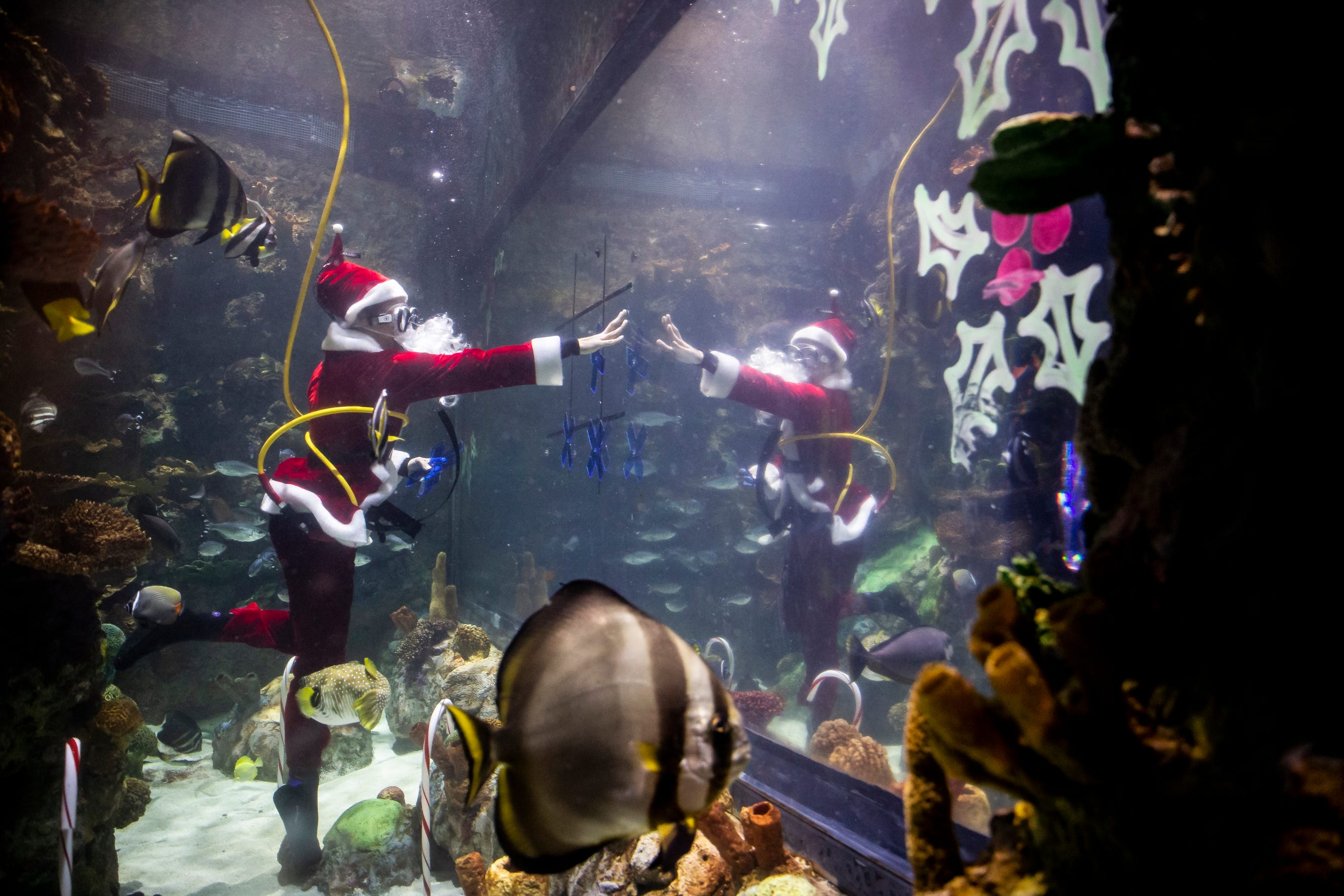 Photos: Santa goes Scuba diving at Blank Park Zoo