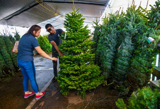 CRW Trading employee Heidi Torres is assisted by tree lot salesman, Travis Torres, as she hunts for the perfect Christmas tree for the company at The Home Depot in Tamuning on Saturday, Dec. 7, 2019.