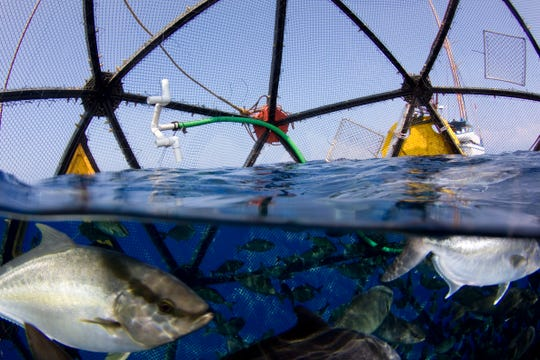 A view from inside the Velella Beta-test net pen in Kona, Hawaii, with the fish in the foreground, the Aquapod net pen frame, and the attendant vessel the S.S. Machias, which was attached to the net pen array.