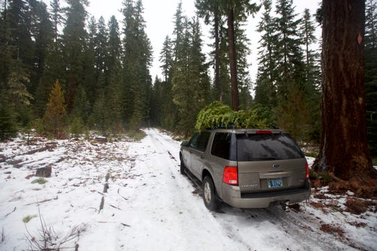 Exploring snowy roads to find a Christmas tree in Willamette National Forest.