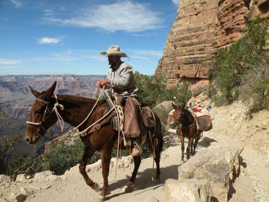 Pack mules are led up South Kaibab Trail on the South Rim of Grand Canyon National Park.