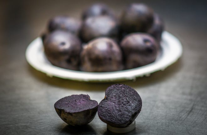 A cross section showing one of Dave Douches' Blackberry potatoes. Douches, the director of the MSU Potato Breeding and Genetics Program spent about 20 years perfecting the purple-skinned and purple-fleshed potato.