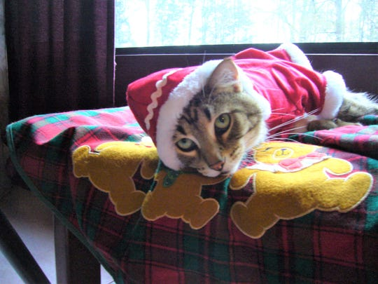 Nick Thomas' cat is dressed and ready for the holidays.