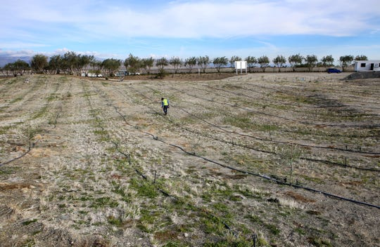 Conserve Landcare employee Martin Rodriguez hydroseeds the olive orchard at the Miralon housing development in Palm Springs, Calif., on December 5, 2019. The gated community will include 7,000 olive trees.