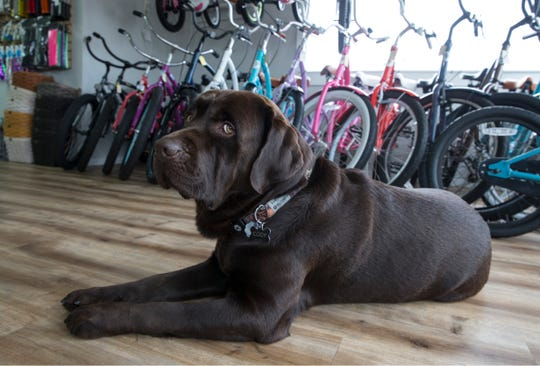 Shore Brake Cyclery offers bicycle sales, accessories, repairs, and rentals. Owners Charlie and Chelsea Kulp, along with their dog Cody, keep people going on two wheels.   