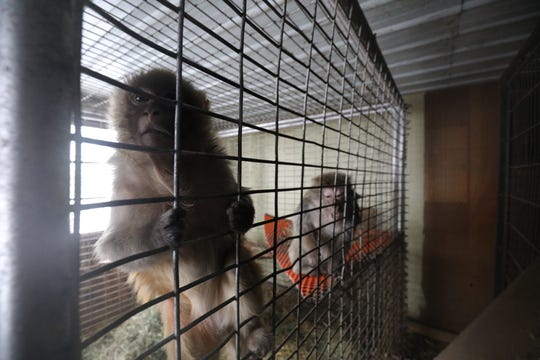 "Animal rescue groups removed animals from the Cricket Hollow Zoo in December after a judge ruled the animals at the roadside zoo were living in ""deplorable conditions."" The judge wrote the zoo was unsafe for both animals and humans."